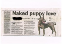 Naked puppy love