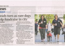 Heads turn as rare dogs help fundraise in the City