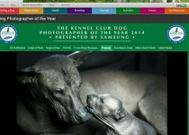 Winner for Aussie photographer at Crufts Photo exhibition  with the Xolo breed