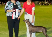Puppies due Mid March Standard Xoloitzcuintle
